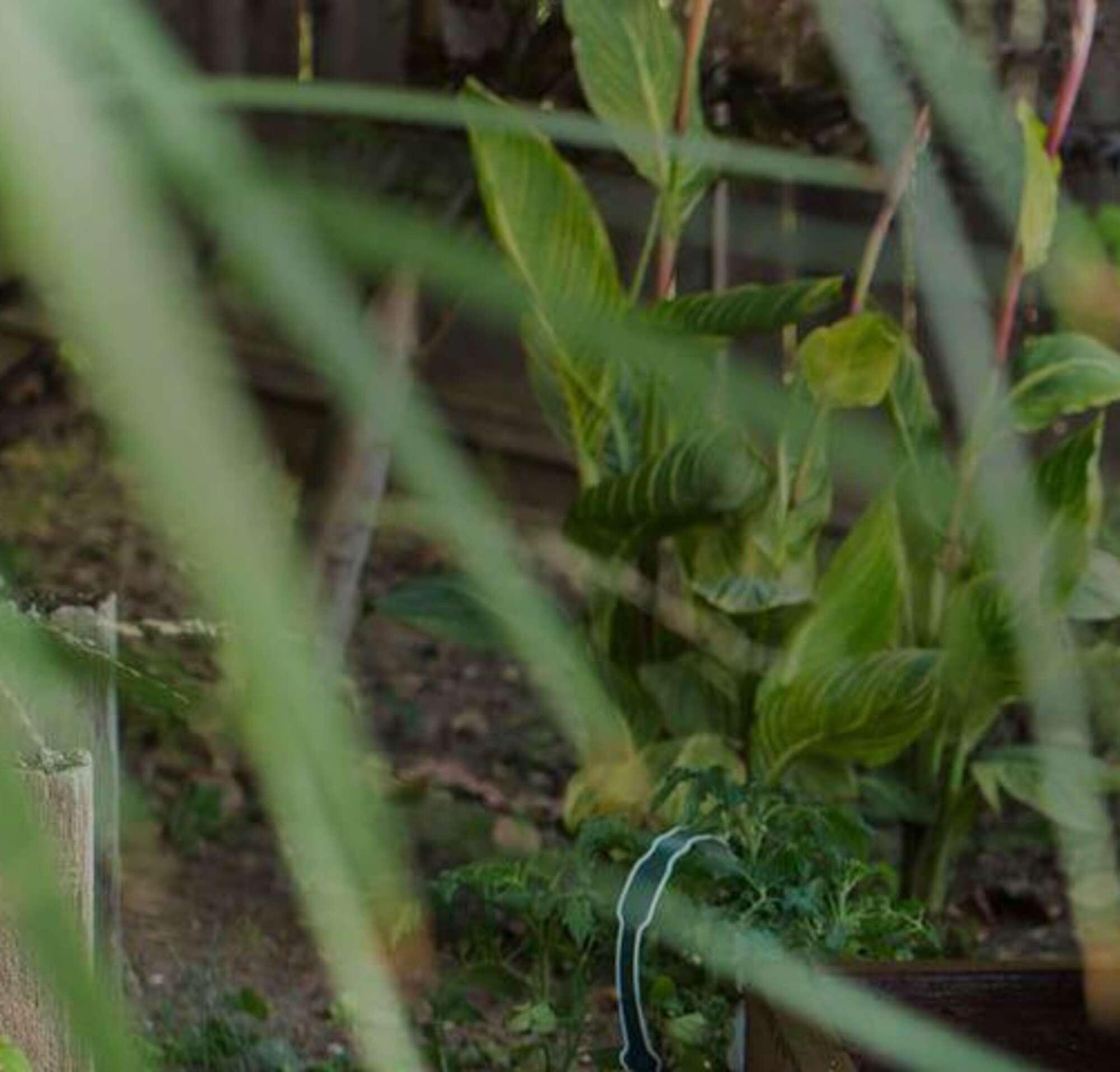 uma mulher com uma criança no jardim